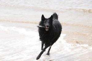 Chuma op het strand